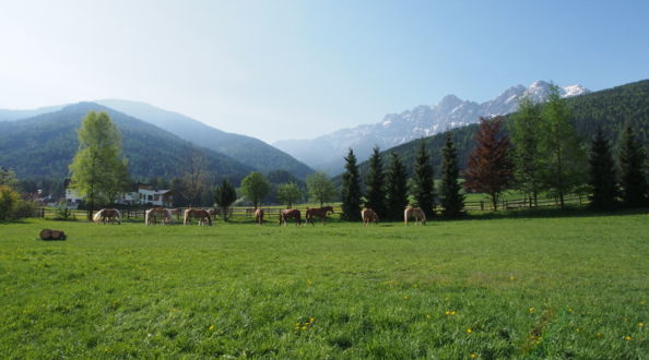Horse riding in South Tyrol, holiday in the alps