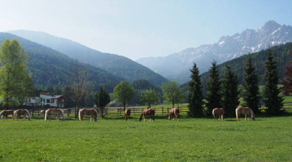 Horse riding in South Tyrol, holiday in the Dolomites