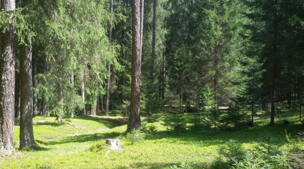 Urlaub in Pustertal, Waldmeditation in Olang